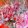 Carnation Topiary Jigsaw