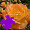 Autumn Rose Jigsaw Free Game