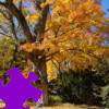 Fall Tree Jigsaw Free Game