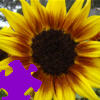 Harvest Sunflower Jigsaw Free Game