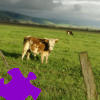 Pasture Jigsaw Free Game