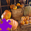 Pumpkins Jigsaw Free Game