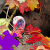 Turkey Jigsaw Free Game