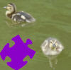 Baby Ducks Jigsaw Free Game