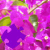 Bougainvillea Jigsaw Free Game