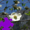 Dogwood Jigsaw Free Game